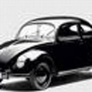beetle